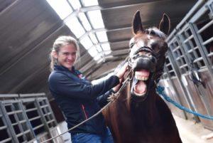 sårbehandlinger med laser til heste